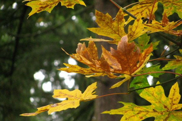 fall-leaves-happiness